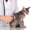 Ветеринарные клиники в Климово